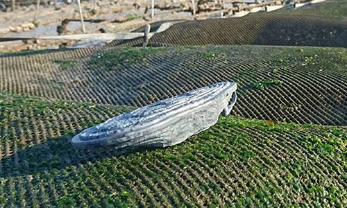 Nepschelpen en helikopters ingezet in de oorlog tegen oesterdieven